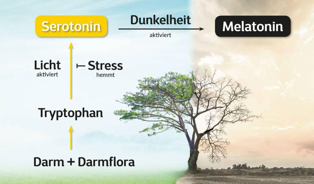 Frühjahrsmüdigkeit, Serotonin, Melatonin, Zeitumstellung
